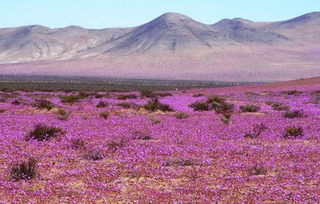 пустыни фото